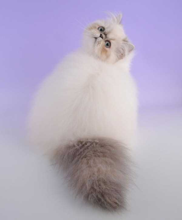 fluffy-cats-kittens (41)