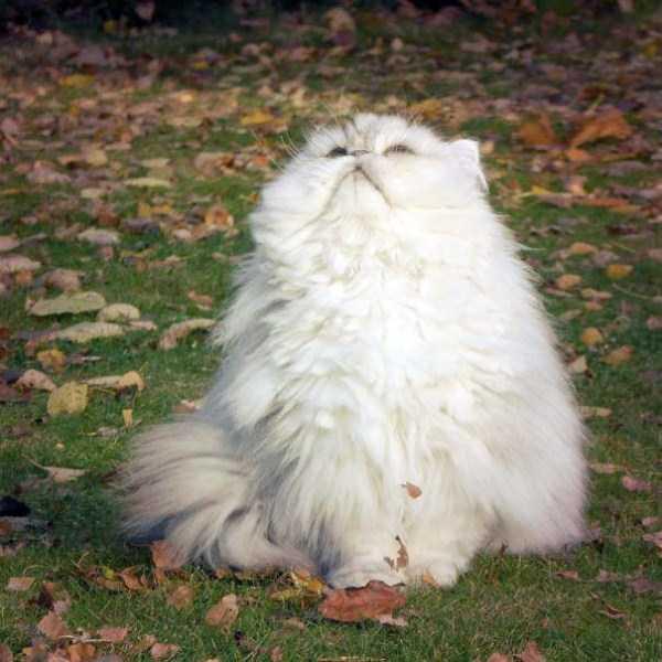 fluffy-cats-kittens (42)