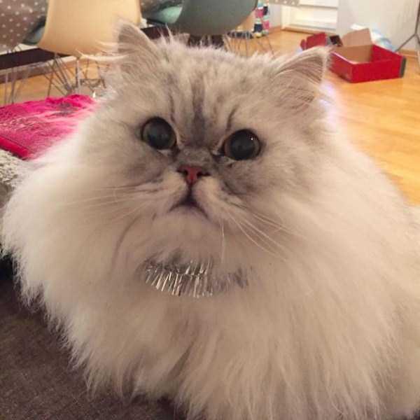 fluffy-cats-kittens (45)