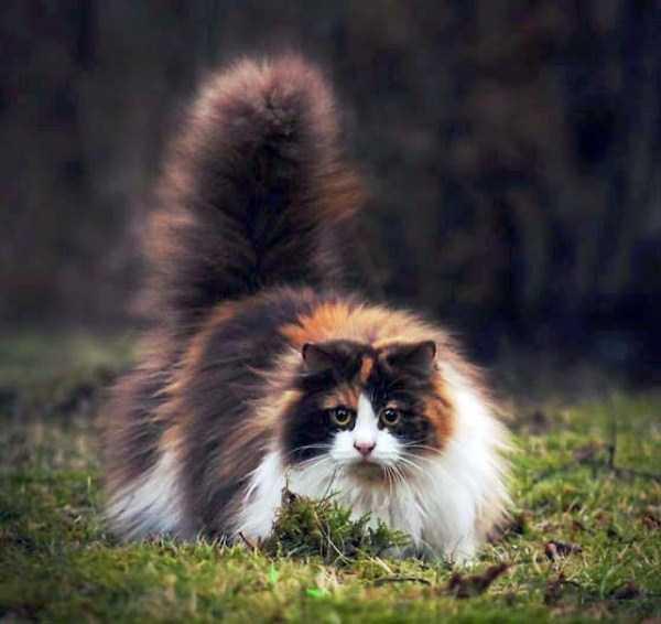 fluffy-cats-kittens (47)