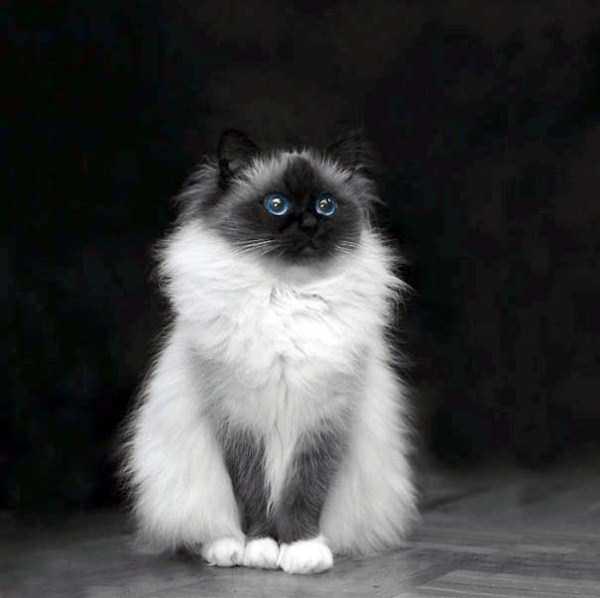 fluffy-cats-kittens (48)