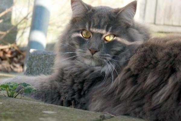 fluffy-cats-kittens (49)