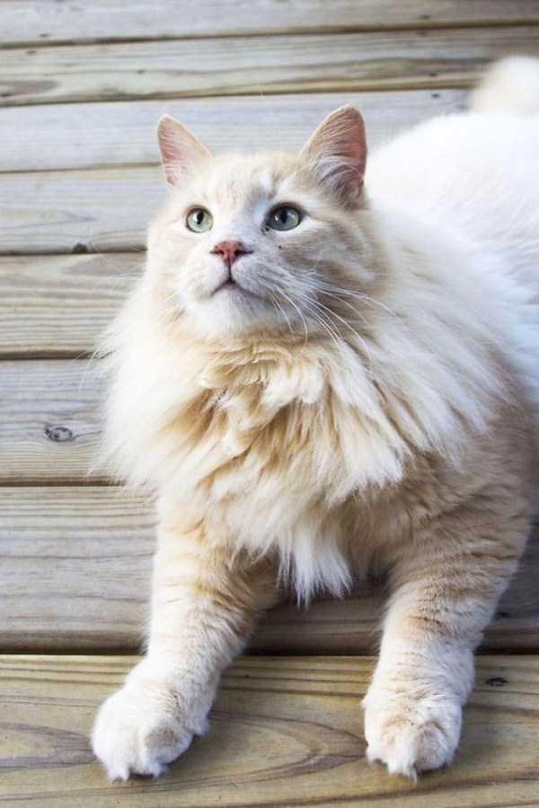 fluffy-cats-kittens (50)