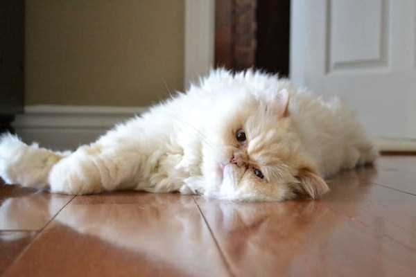 fluffy-cats-kittens (53)