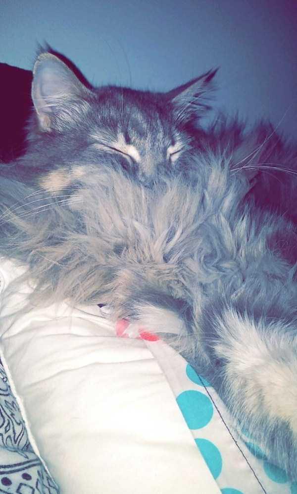fluffy-cats-kittens (58)