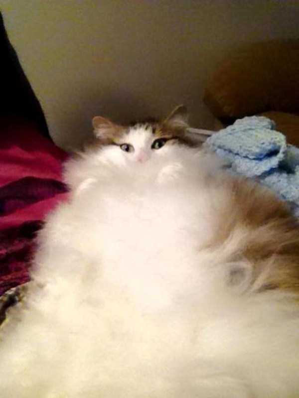 fluffy-cats-kittens (59)