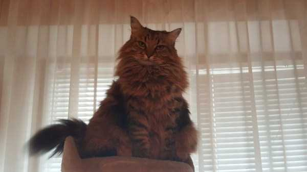 fluffy-cats-kittens (6)
