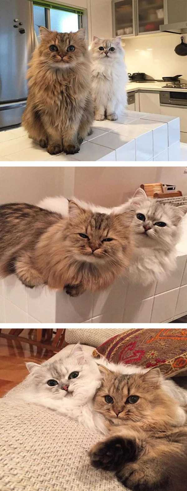 fluffy-cats-kittens (61)