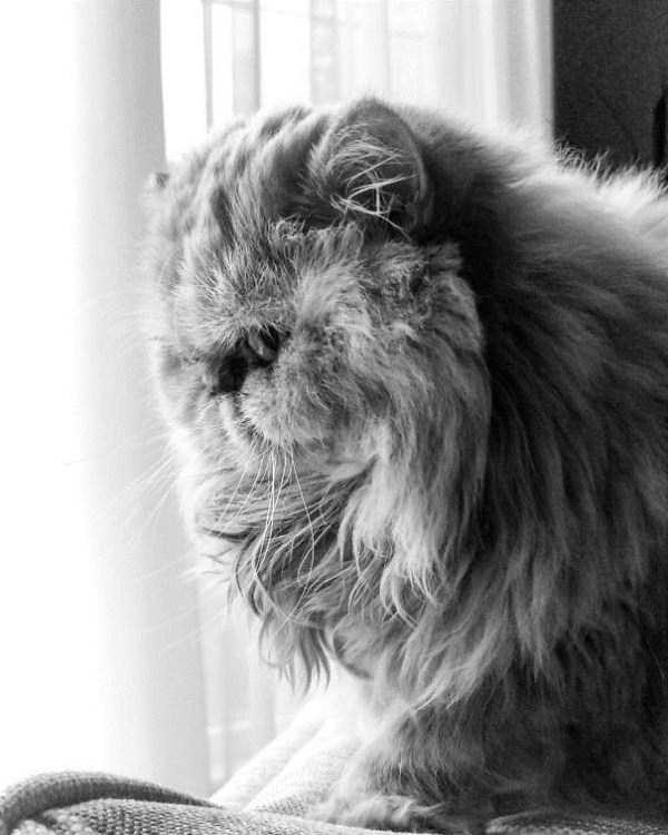fluffy-cats-kittens (63)