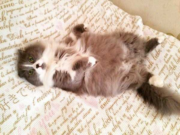 fluffy-cats-kittens (67)