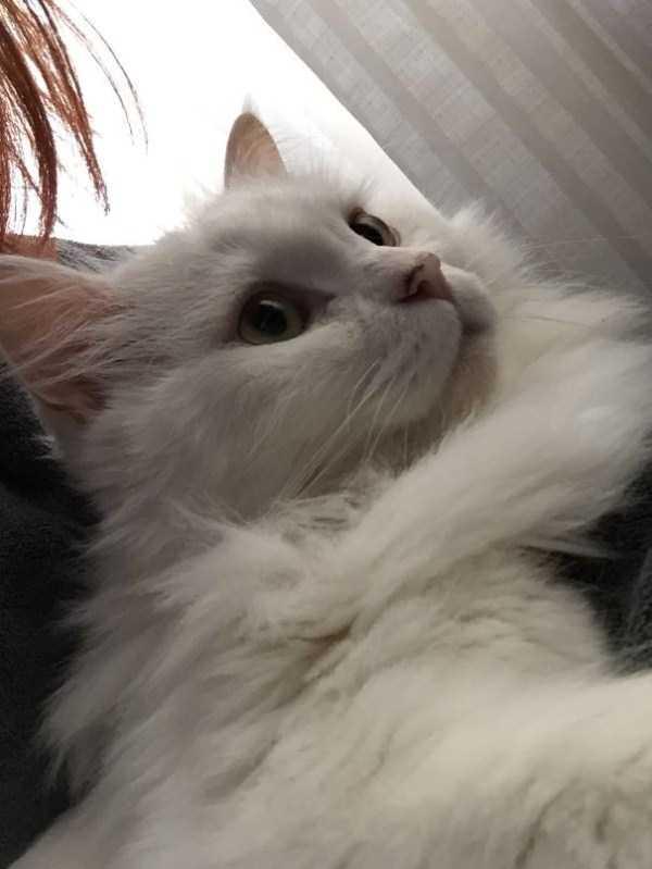 fluffy-cats-kittens (71)