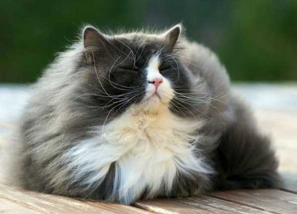 fluffy-cats-kittens (72)