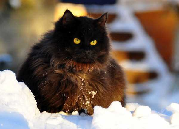 fluffy-cats-kittens (76)