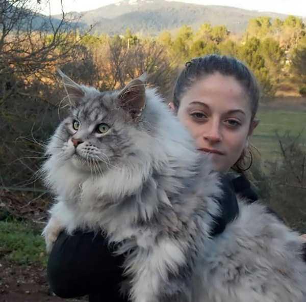 fluffy-cats-kittens (79)