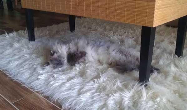 fluffy-cats-kittens (82)