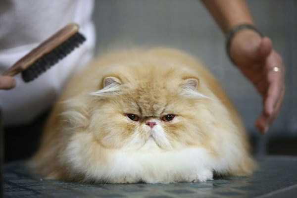 fluffy-cats-kittens (85)