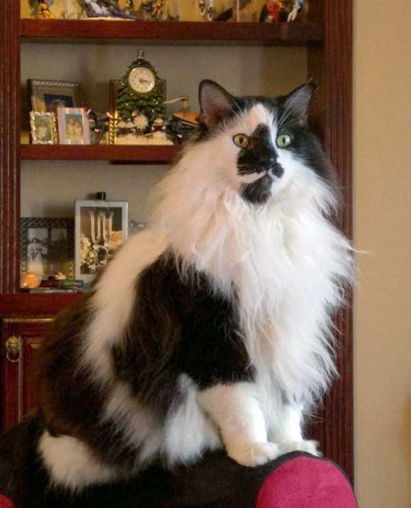 fluffy-cats-kittens (96)