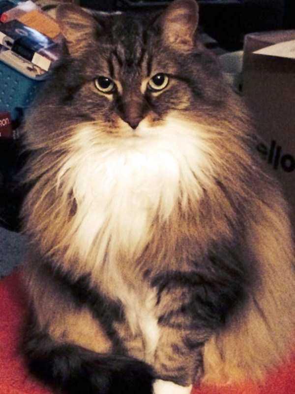 fluffy-cats-kittens (97)