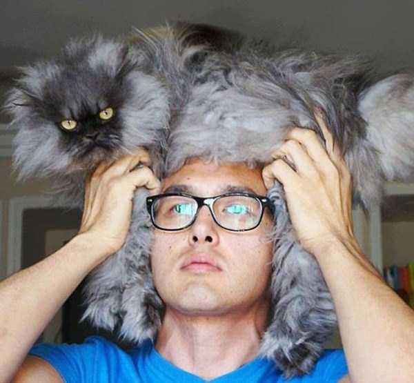 fluffy-cats-kittens (98)