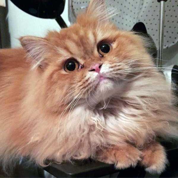 fluffy-cats-kittens (99)