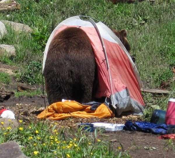 funny-camping-photos (12)