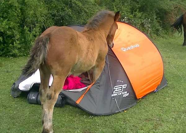 funny-camping-photos (22)