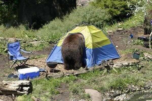 funny-camping-photos (23)