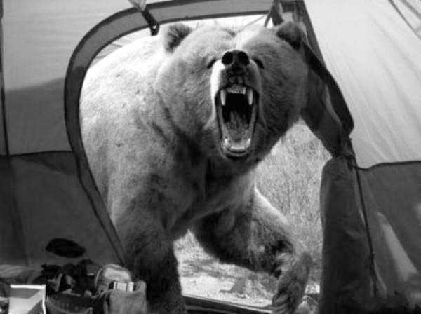 funny-camping-photos (30)