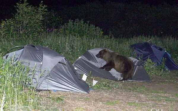 funny-camping-photos (7)