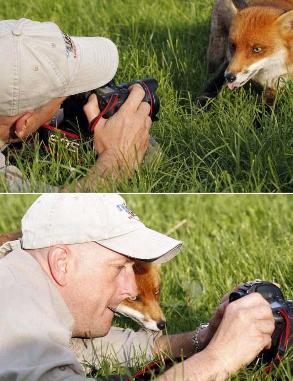 nature-wildlife-photographers (10)