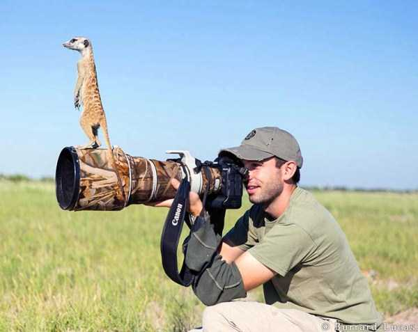 nature-wildlife-photographers (17)