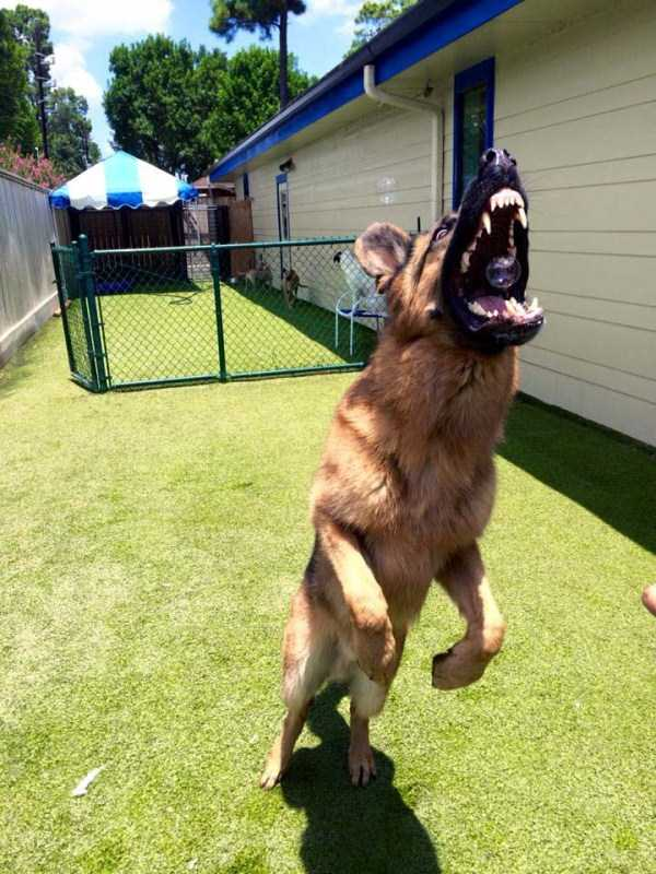 perfectly-timed-pics (42)