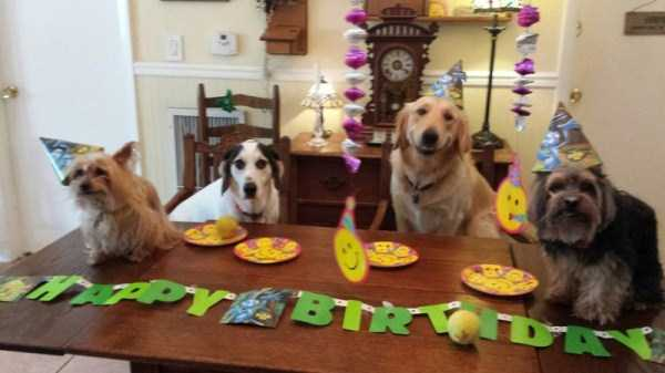 pets-birthday-party (1)