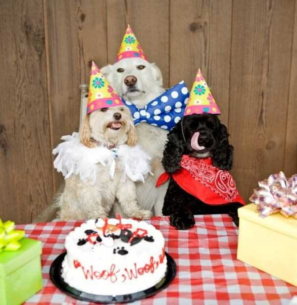pets-birthday-party (10)