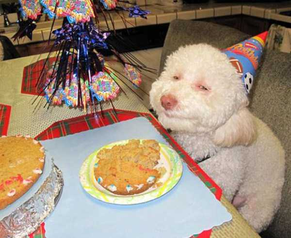 pets-birthday-party (2)