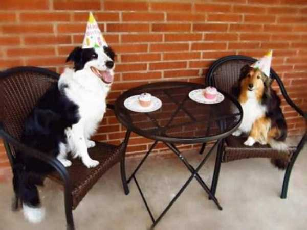 pets-birthday-party (23)