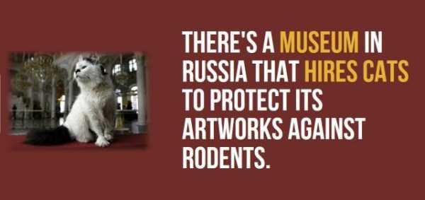 russia-facts-trivia (11)