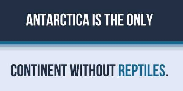 things-facts-about-antarctica (10)