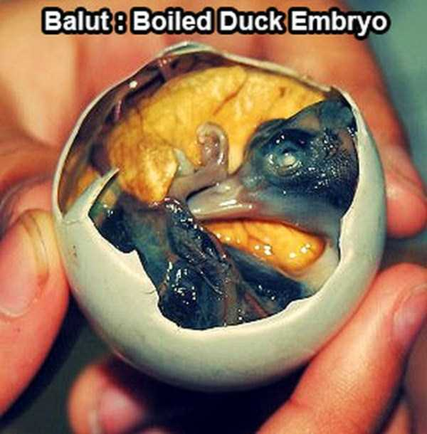 bizarre-weird-foods-from-asia (3)