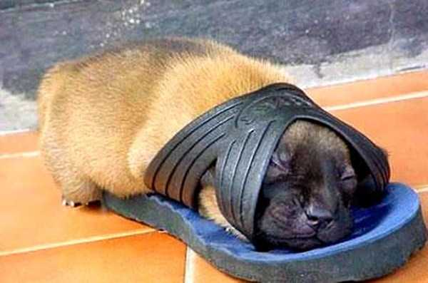 funny-dogs-sleeping-anywhere (1)
