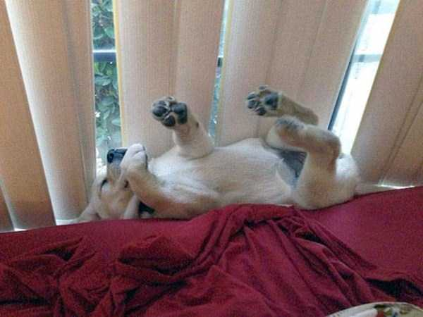 funny-dogs-sleeping-anywhere (16)