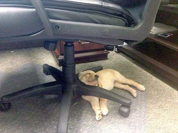 funny-dogs-sleeping-anywhere (22)