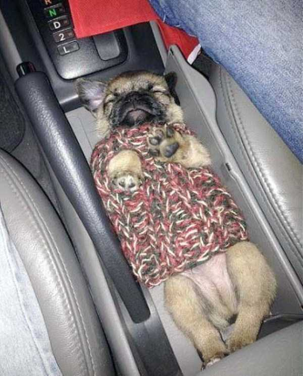 funny-dogs-sleeping-anywhere (3)