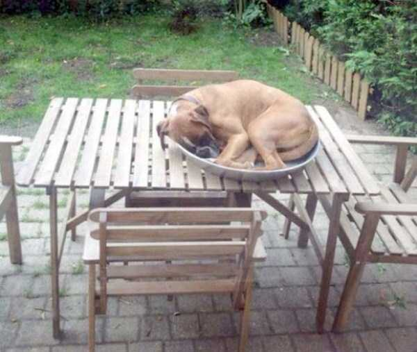 funny-dogs-sleeping-anywhere (38)
