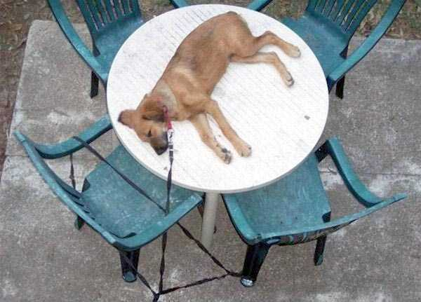 funny-dogs-sleeping-anywhere (4)