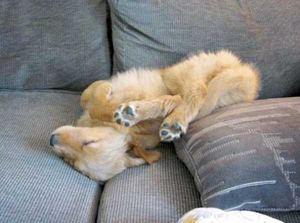 funny-dogs-sleeping-anywhere (40)