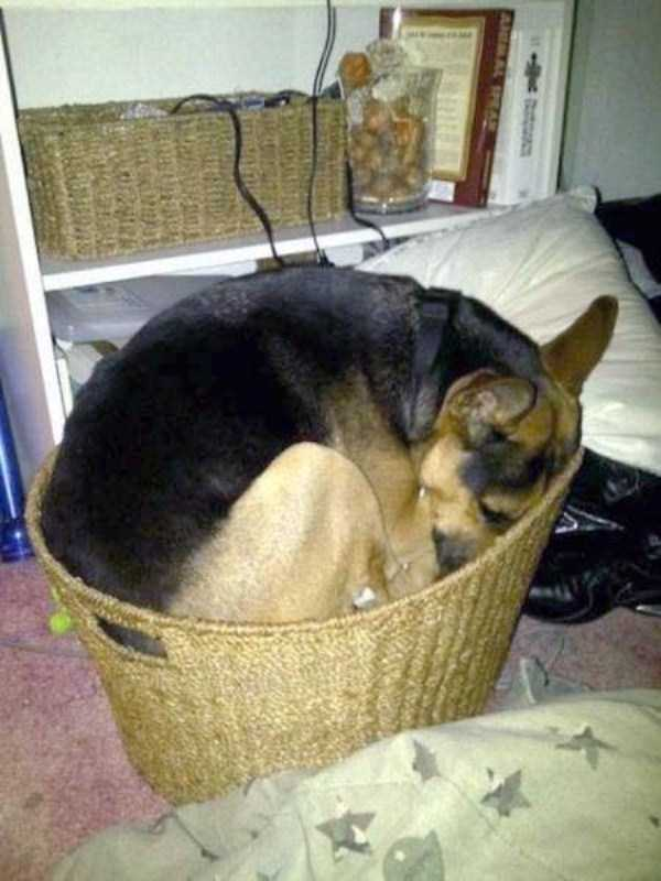 funny-dogs-sleeping-anywhere (8)