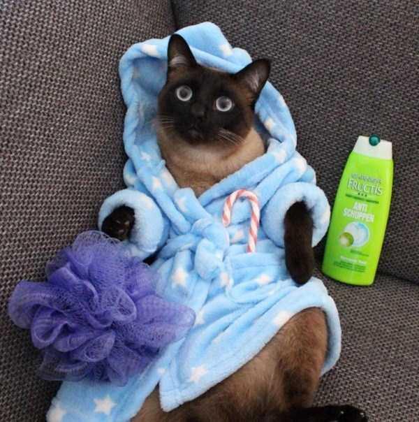 little-lenny-siamese-cat-costumes (11)