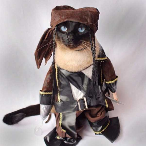 little-lenny-siamese-cat-costumes (13)