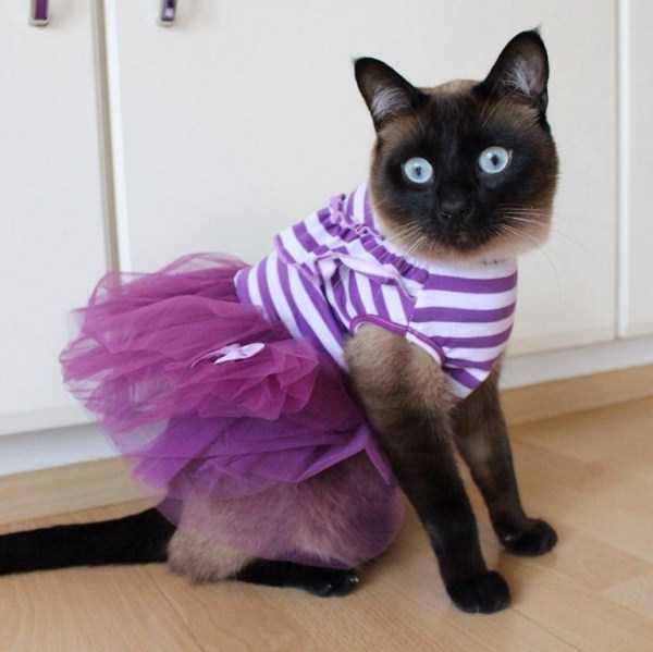 little-lenny-siamese-cat-costumes (14)